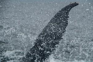 20150830-IMGP6671whales