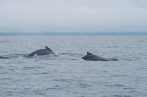 20150830-IMGP6683whales