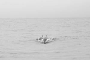 20150830-IMGP6721whales