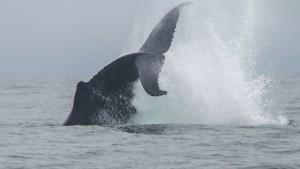 20150830-IMGP6778whales