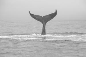 20150830-IMGP6786whales