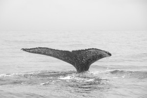 20150830-IMGP6807whales