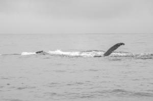 20150830-IMGP6839whales