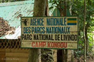 Camp Kongou in Ivindo National Park