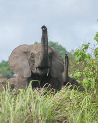 Hiking and Wildlife in Loango National Park, Gabon | ATGabon