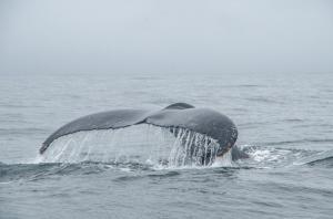 20150830-IMGP6805whales